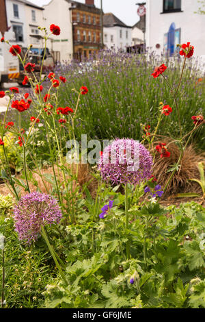 UK, England, Devon, Honiton, High Street, allium flowers amongst floral planting outside St Paul's church - Stock Photo