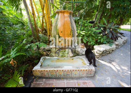 Former urinal in the garden of the Ernest Hemingway House in Key West in Florida. It is now a drinking place for - Stock Photo