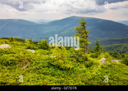 lonely conifer tree and stone on the edge of hillside with path in the grass on top of high mountain range - Stock Photo