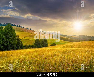 large meadow with mountain herbs and a conifer forest in front of mountainous massif away in the background in evening - Stock Photo