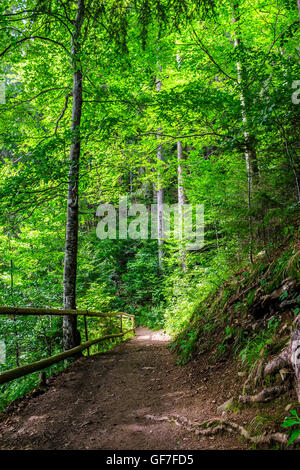 narrow path in a forest. small wooden fence near the slope of the path. tree roots have sprouted across the footpath. - Stock Photo