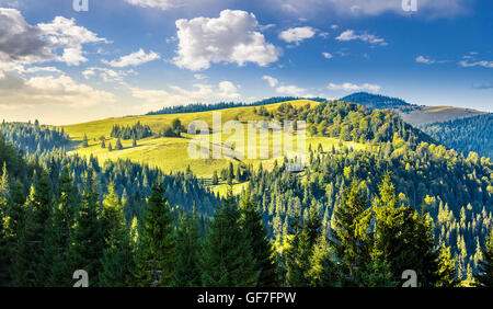 coniferous forest on the edge of the hill in Carpathian mountains - Stock Photo