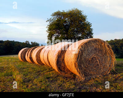Bale of straw, harvested wheatfields, landscape around Orvieto - Umbria, Italy - Stock Photo