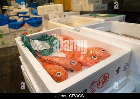 Big eye red fish at the Tokyo Fish Market - Stock Photo