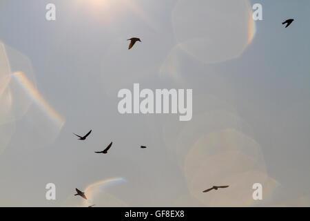 Swallows against the sky with sun sparkles - Stock Photo