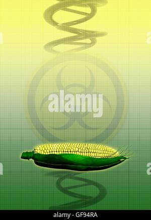 Sweet corn with DNA and bio hazard symbol, illustration. - Stock Photo