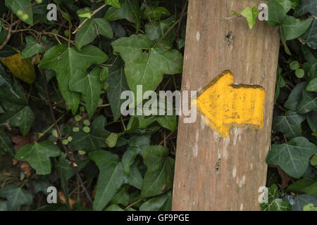 Public footpath / right of way marker arrow in Cornwall (England). Visual metaphor for concept of direction and - Stock Photo