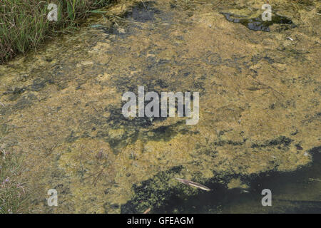 Stagnant pond water - metaphor for water safety, purity, quality and water resources, but also for the stagnation - Stock Photo
