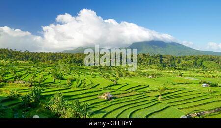 Rice Field Terrace landscape, Bali, Indonesia - Stock Photo