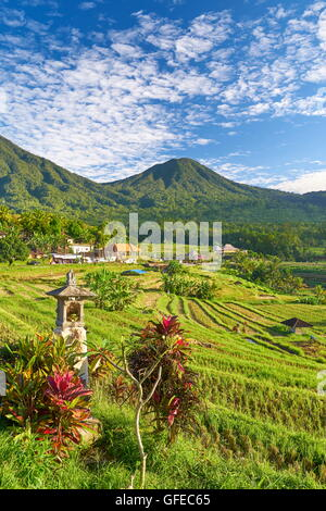 Jatiluwih Rice Terrace, Bali , Indonesia - Stock Photo