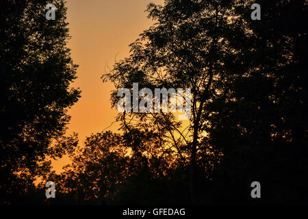 Golden glow of sunset against silhouetted trees - Stock Photo