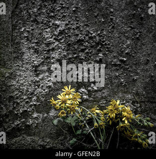 Abstract view of wilting wild yellow flowers as seen by the side of an ancient gravestone in mid summer. - Stock Photo