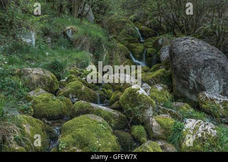 Ason river near its source Cantabria, Spain, Europe - Stock Photo
