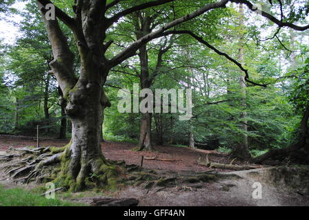 ashdown forest south of england