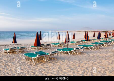 Row of sunbeds and parasols on a beach - Stock Photo