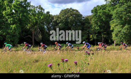 Ranmore Common, Surrey, UK, 31 July 2016. Prudential RideLondon-Surrey Classic 2016. The peloton passes the flora - Stock Photo