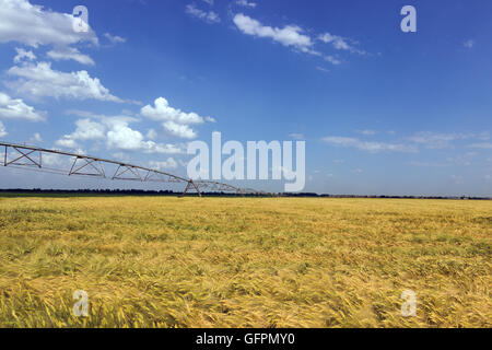 Field of green barley. Sprinkler system crops. Industrial irrigation equipment on farm field Green wheat field and - Stock Photo