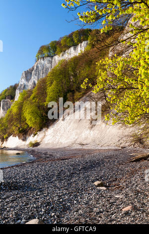 Koenigstuhl cliff and a beech forests, Jasmund National Park, Rügen, Germany, Unesco World Heritage. - Stock Photo