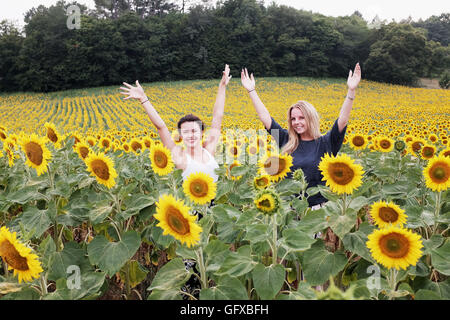 Teenage girls in a Field of sunflowers at Frayssinet le-Gelat in Le Lot Region department France - Stock Photo