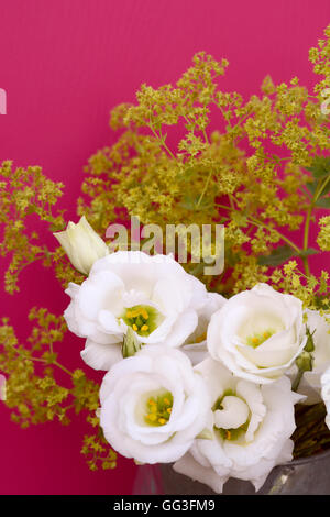 White tulip gentian flowers and frondy alchemilla mollis against a deep pink background - Stock Photo