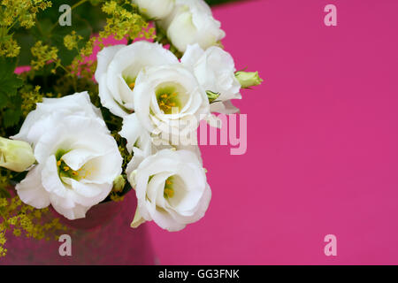 Delicate white prairie gentian flowers against a pink painted background with copy space - Stock Photo