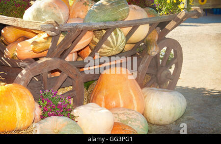 Many colorful pumpkins near a wooden cart on a sunny autumn day - Stock Photo