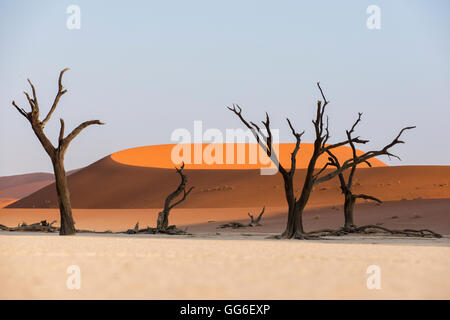 Dead acacia trees silhouetted against sand dunes at Deadvlei, Namib-Naukluft Park, Namibia, Africa - Stock Photo