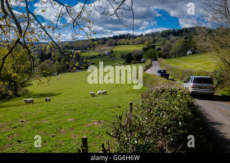 Country lane in Hewelsfield near Brockweir in Wye Valley in spring. England UK. Early spring with sheep in field. - Stock Photo