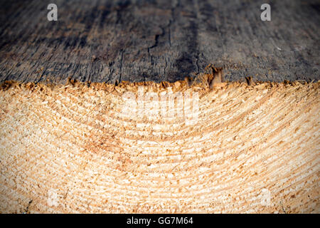 growth rings - wooden texture