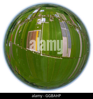 Aerial view, tulip fields, agriculture, colorful tulip fields, tulips (lat.Tulipa), Fish-Eye View, fisheyelens,ornamental - Stock Photo