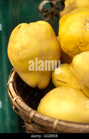 Quince in basket - Stock Photo