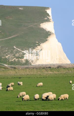 geography / travel, Great Britain, England, East Sussex, Seven Sisters Country Park, Cuckmere haven, sheep grazing - Stock Photo