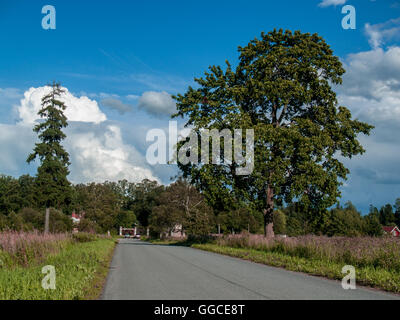 Direct wide road to the estate in August summer clear day along the field with grass and big trees - Stock Photo