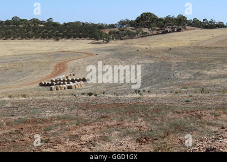 A dry field after harvest with trees in the hills at the back at Two Hands Wine, Barossa Valley, Australia - Stock Photo