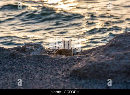 cat on the mediterranean coast in sitges stock photo, royalty free, Garten und erstellen