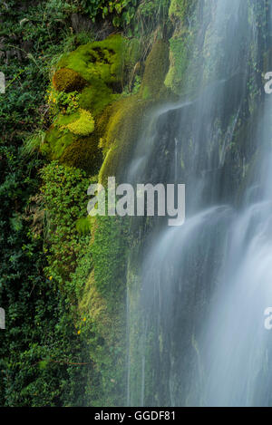 South America; Argentina, Patagonia, Rio Negro, Esquel, Waterfall, National Park Los Alerces - Stock Photo