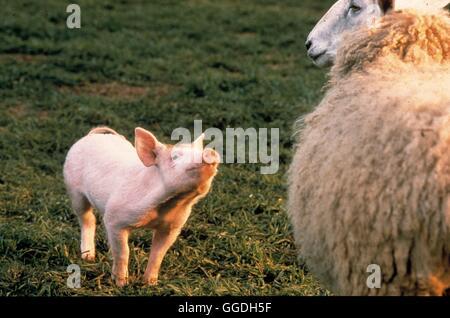 EIN SCHWEINCHEN NAMENS BABE / Babe, The Gallant Pig AUS/USA 1995 / Chris Noonan Bild: Schweinchen BABE sucht auf - Stock Photo