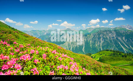 geography / travel, Germany, Bavaria, alpine rose blossom, panorama from the Fellhorn (peak), behind it the Allgaeu - Stock Photo