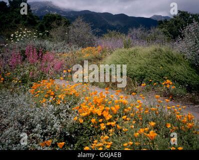 santa barbara botanic garden california usa gdn106825 stock photo - Santa Barbara Botanic Garden