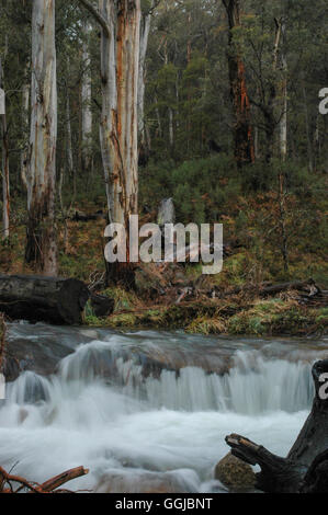 Landscape in the Victoria High Country - Stock Photo