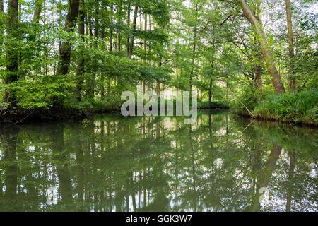 River flowing through Spreewald, UNESCO biosphere reserve, Luebbenau, Brandenburg, Germany - Stock Photo