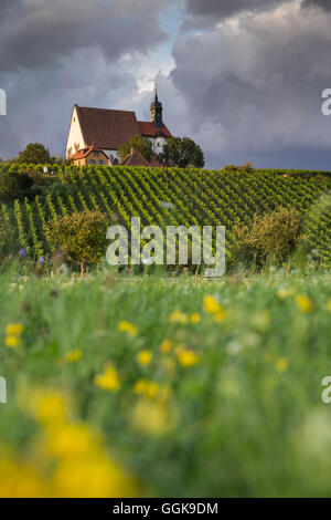 Maria im Weingarten pilgrimage church seen through a wildflower meadow, Volkach, Franconia, Bavaria, Germany - Stock Photo