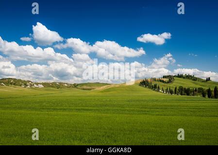 Landscape near Crete Senesi, near Siena, Tuscany, Italy - Stock Photo