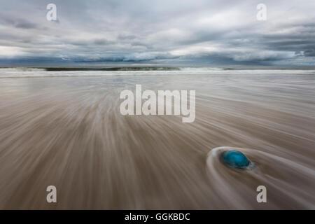 Blue Jellyfish on the beach, Sylt, North Sea, Nordfriesland, Schleswig-Holstein, Germany - Stock Photo