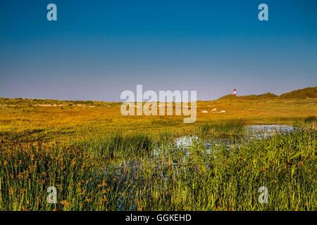 List east Lighthouse, Ellenbogen, Sylt Island, North Frisian Islands, Schleswig-Holstein, Germany - Stock Photo