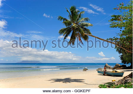 Palm tree on the beach, Beau Vallon, Mahe Island, the Seychelles, Indian Ocean - Stock Photo