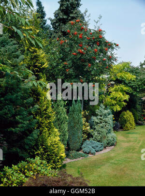 Shrubs  Trees and Conifers   STC035195 - Stock Photo