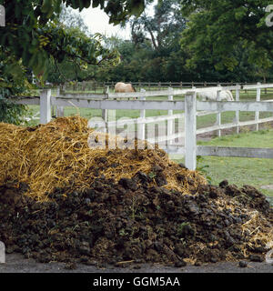 Compost - Heap - of fresh horse manure that must be left to rot down prior to use   TAS023257     Ph - Stock Photo