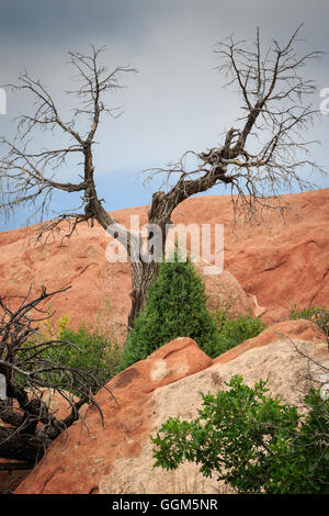 The dramatic red sandstone landscape of the Garden of the Gods in Colorado Springs, CO, USA - Stock Photo