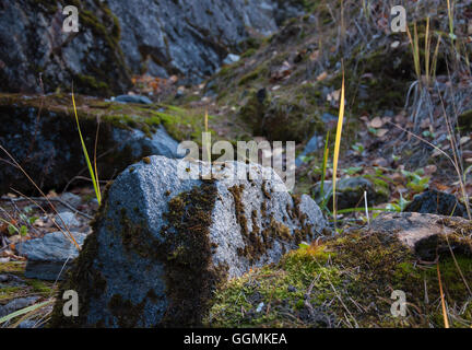 Huge grey boulders, which a typical background of every island in south region  Karelia republic - Stock Photo